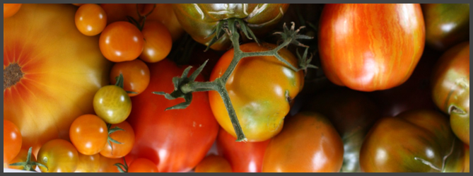 how to make tomatoes ripen faster on the vine
